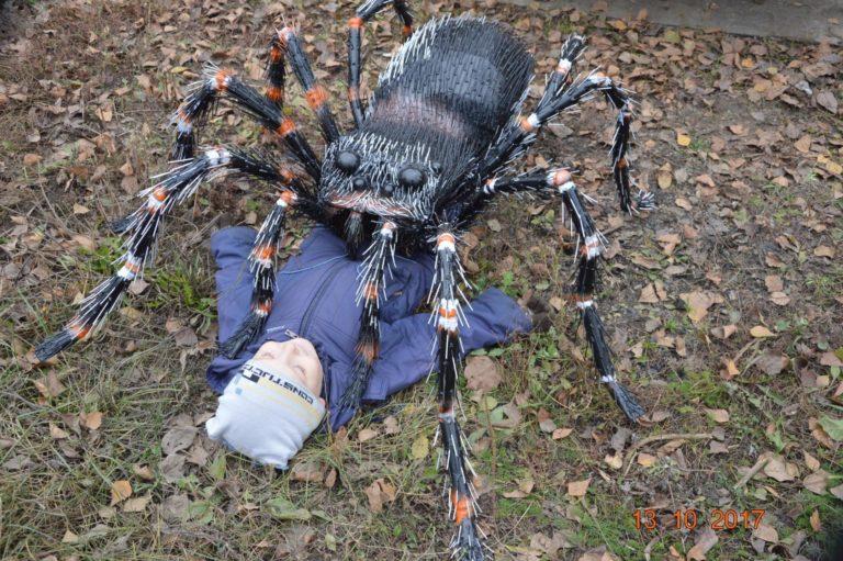 В Красноуфимске завёлся гигантский паук Федя 0Dg6U_0_yXE-768x511