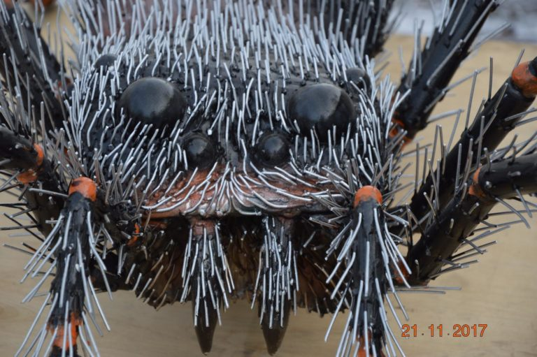 В Красноуфимске завёлся гигантский паук Федя NcWAldlfHOY-768x511