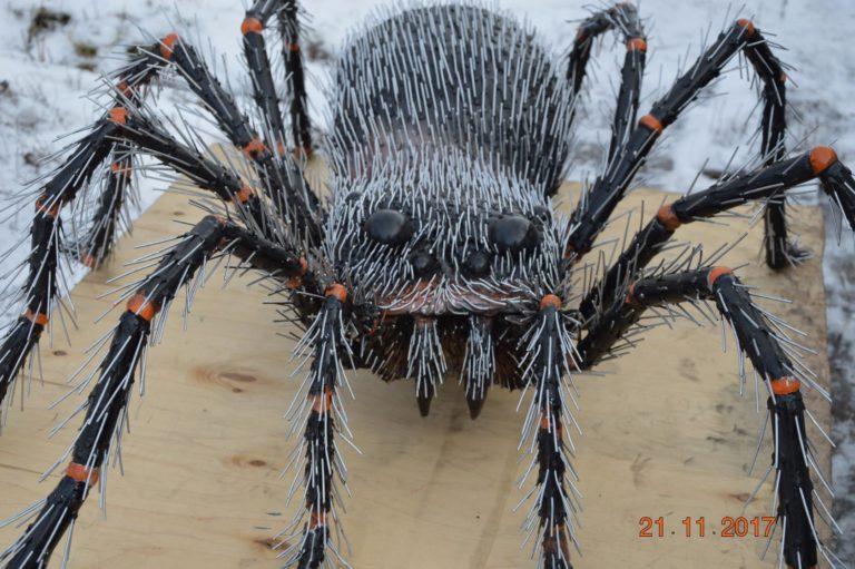 В Красноуфимске завёлся гигантский паук Федя Oa3ANAd4kf0-768x511